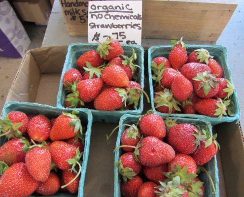 4 Schachteln mit Bio-Erdbeeren