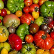 Foto von vielen bunten Tomaten