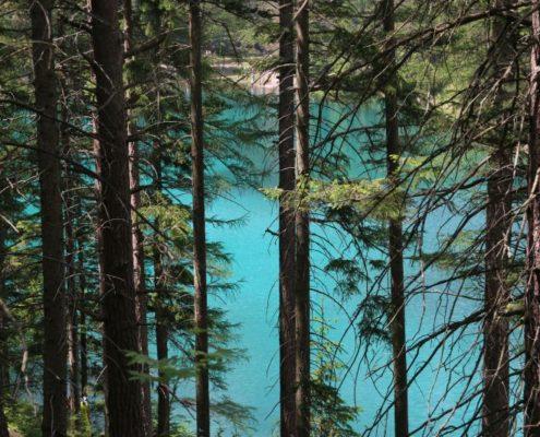 Türkises Wasser schimmert durch Nadelbäume