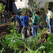 Mehrere junge Menschen arbeiten in Garten mit Gemüse und Pflanzen