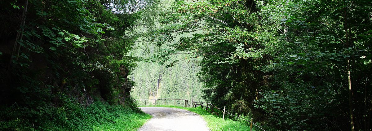 Weg durch Baumreihe