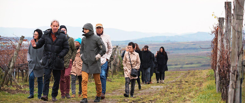 Mehrere Personen gehen dick eingepackt in Mäntel durch einen herbstlichen Weingarten