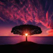 Violett lila Abendhimmel am Meer, Sonne scheint durch eine Pinie mit breitem Schirm