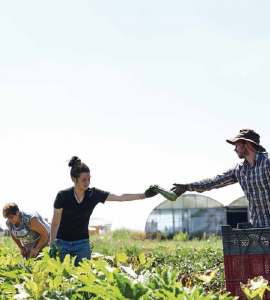zwei Frauen und ein Mann auf grünem Feld bei der Ernte