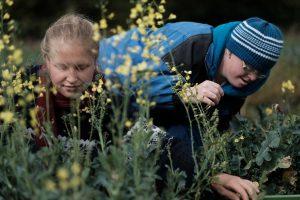 Gelb blühende Blüten, im Hintergrund 2 Menschen, einer mit Down Syndrom