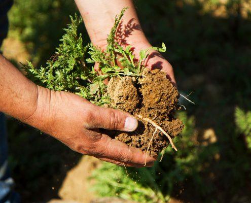 Männliche Hände halten Stück Erdboden