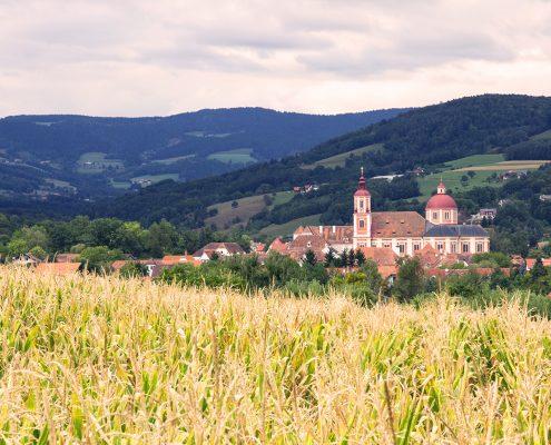 Blick über Weizenfeld mit Stif im Hintergrund