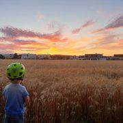 Kleinkind steht vor Weizenfeld