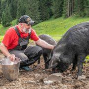 Bio-Haubenkoch Jeremias Riezler bei seinen Schweinen